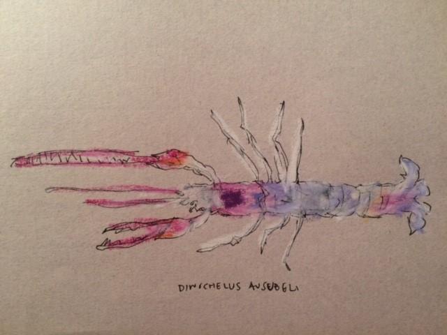 Dinochelus ausubeli, by Olivia Pattison